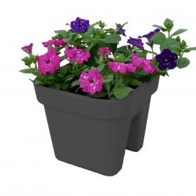 antracyt-różowy-fioletowy