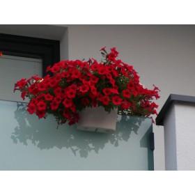 Kwiaty po dwóch miesiącach od nasadzenia