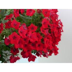 Kwiaty dwa miesiące od nasadzenia