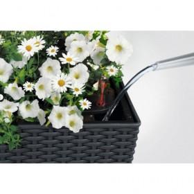 System nawadniający pozwala na rzadsze podlewanie i łatwiejsze podlewanie roślin